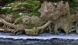 Lockere Erde Faules Holz : holz erde wasser foto bild natur kreativ aufnahmetechniken natur fine art bilder auf ~ A.2002-acura-tl-radio.info Haus und Dekorationen