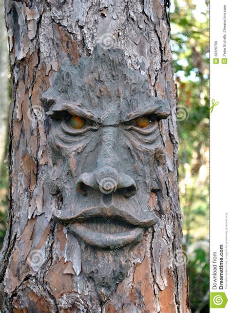 face   tree royalty  stock  image