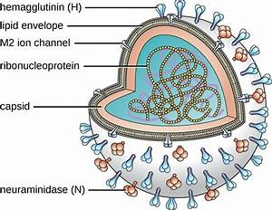 Viral Infections Of The Respiratory Tract