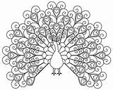 Coloring Peacocks Pages Children Simple Printable Print Justcolor sketch template