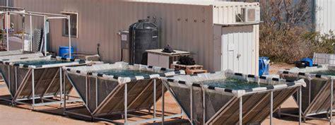 Экологичное топливо . техножизнь . почему именно технология производства масла из водорослей