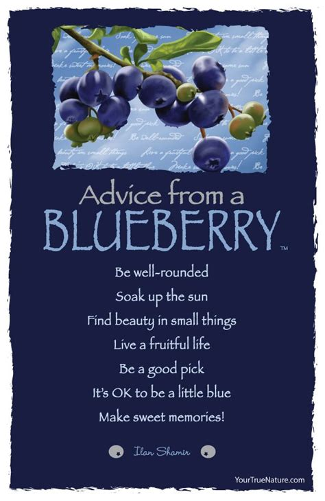 advice   blueberry good advice blueberry farm