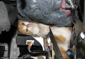 Cat Stuck Inside of Car