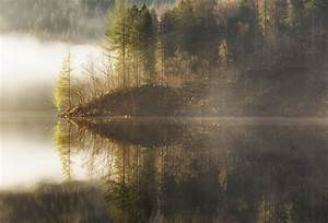 Free, Images, Landscape, Tree, Water, Nature, Forest, Swamp, Wilderness, Light, Fog, Mist