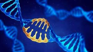 Genome Editing  A Perspective On The Application Of Crispr