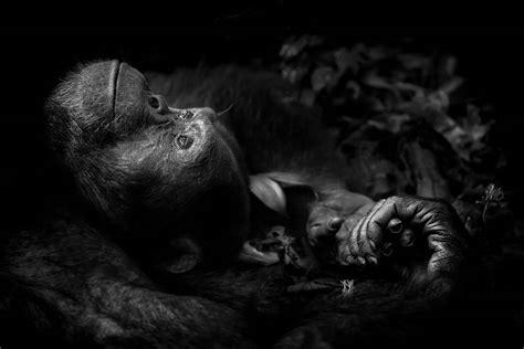 wildlife photographer   year awards  winners