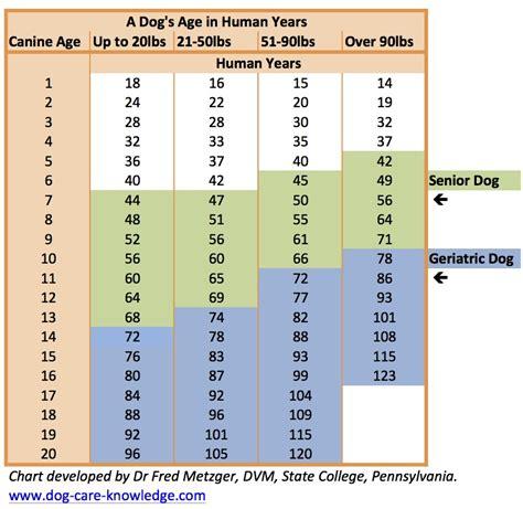 geriatric dog care   prolong  dogs life