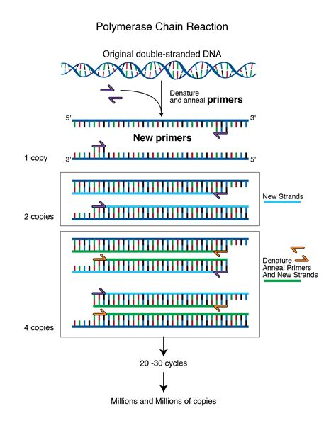 primer talking glossary  genetic terms nhgri