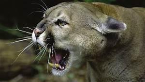 NOVA - Official Website | Wild Predator Invasion  Wild