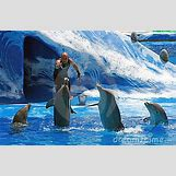 Bottlenose Dolphin Playing With A Ball | 400 x 261 jpeg 63kB