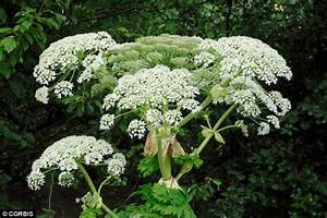 Man On Fishing Trip Suffers Wrath Of Poisonous Plant, Left ...