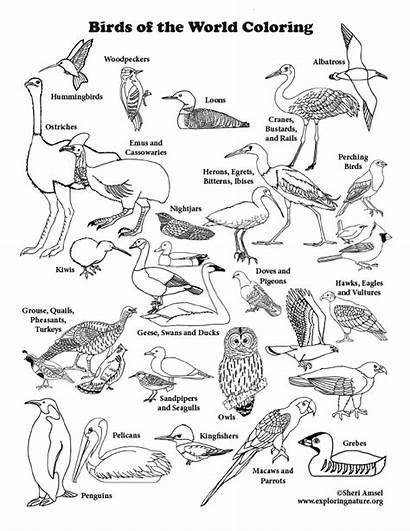 Coloring Bird Birds Nature Printing Pdf