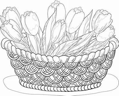 Basket Flower Sketch Fruit Coloring Flowers Drawing