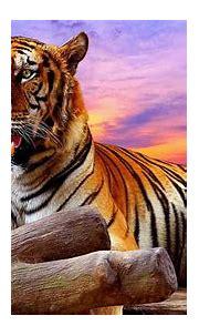 Page 2 | tiger 1080P, 2K, 4K, 5K HD wallpapers free ...