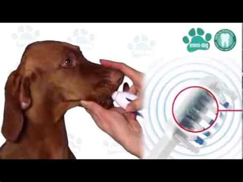 emmi ultra ultraschall zahnbuerste fuer hunde  katzen