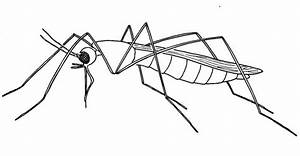 15  Best New Mosquito Drawing Easy Step By Step