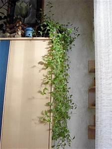 Pflanzen Die Schnell Hoch Wachsen : pflanzen die schnell wachsen und sich von allein vermehren pflanzen botanik green24 hilfe ~ Michelbontemps.com Haus und Dekorationen