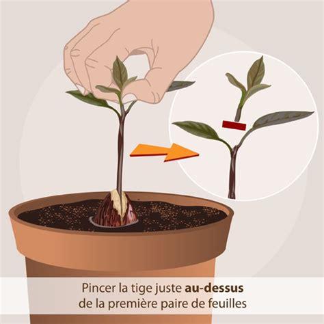 faire pousser d la en interieur faire pousser un avocat jardinage