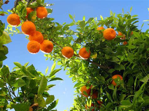 Orange Fruit Wallpaper Hd Pictures  One Hd Wallpaper