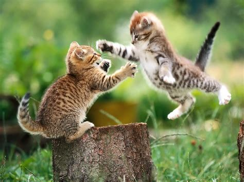 funny animals cats fight fun