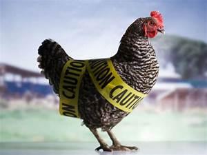 Daff To Help Farmers Stop The Spread Of Bird Flu