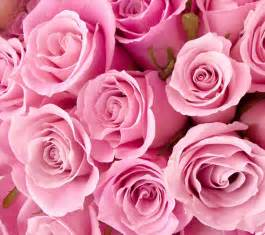 dragã e mariage pink flowers in nanopics
