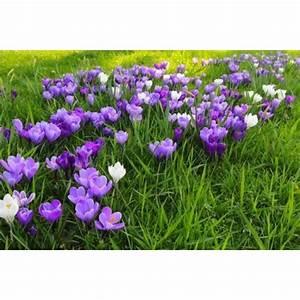 Parterre De Plante : r aliser un parterre de fleurs ~ Melissatoandfro.com Idées de Décoration