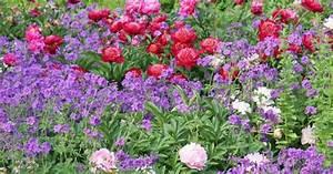 Blumenbeete Zum Nachpflanzen : drei staudenbeete einfach nachgepflanzt sweet home pinterest ~ Yasmunasinghe.com Haus und Dekorationen