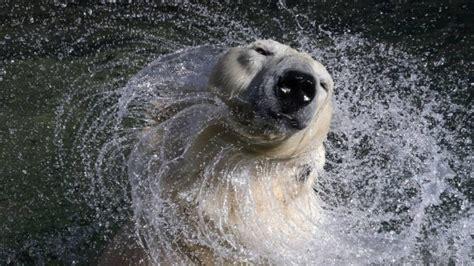 Dzīvnieku pasaules šī gada skaistākās bildes. FOTO - Jauns.lv