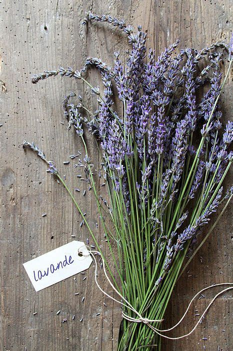 Glass Candle Holders Lavendel Deliciously Smell by 874 Best Lovely Lavender Images On Lavender