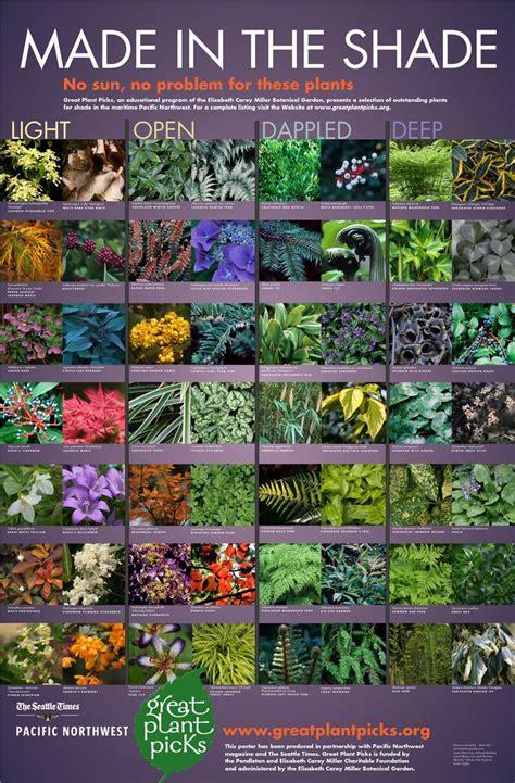 best 25 shade plants ideas on shade