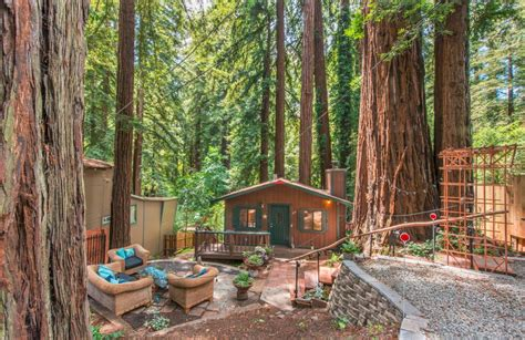 tiny cabin surrounded  giant redwood trees