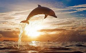 HD Dolphins Wallpapers and Photos | HD Animals Wallpapers