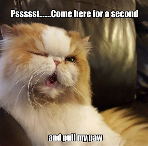 Cat Fart Meme - lolcats fart lol at funny cat memes funny cat pictures with words on them lol cat
