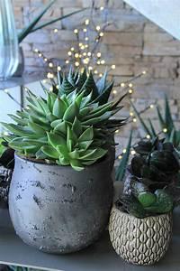 Entretien Plantes Grasses : les plantes grasses symphonie florale ~ Melissatoandfro.com Idées de Décoration