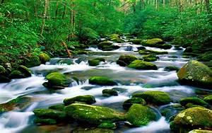 Beautiful, Untouched, Nature, Pristine, Mountain, River