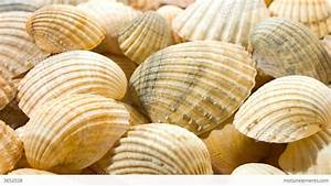 Sea Shells Nature Background 4K Stock video footage | 3652038