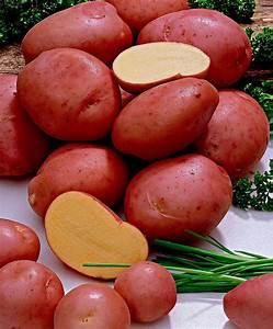 Kartoffeln Zum Einkellern Kaufen : pflanzzeit kartoffeln kartoffeln richtig lagern 5 tipps ~ Lizthompson.info Haus und Dekorationen