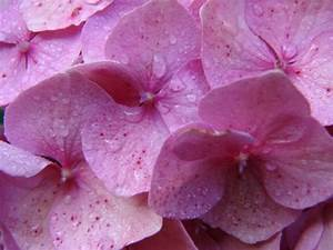 Nuance De Rose : couleur rose nuances tout ~ Melissatoandfro.com Idées de Décoration