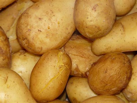 photo gratuite pommes de terre cuits faire cuire