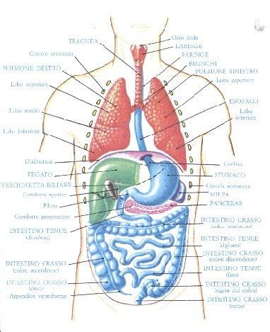 Corpo Umani Organi Interni Il Meglio Di Potere Foto Interno Corpo Umano Gli Organi