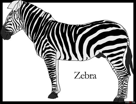 How To Draw A Zebra Step By Step Safari Animals Animals