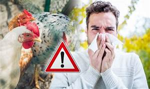 Bird Flu Symptoms  Four Signs To Watch For As First Ever