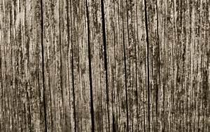 Wallpaper, Forest, Branch, Texture, Tree, Crack, Floor, Board, Hardwood, Soil, Woody, Plant