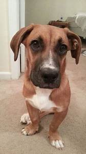 basset hound boxer mix - Google Search | Cute puppies ...
