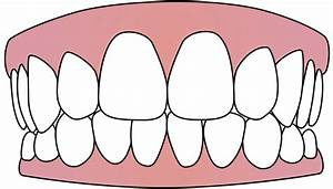 File:Tooth icon 001.svg - Wikimedia Commons