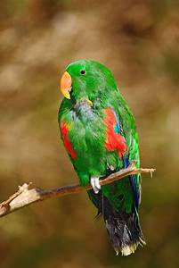 sided parrot health personality colors sounds and