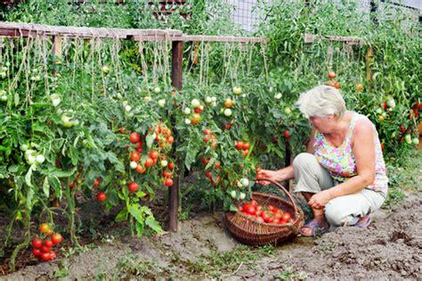 kitchen garden ideas planning a kitchen garden green living ideas
