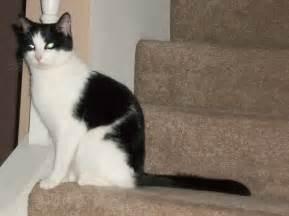 black cat white cat black and white cat stock by brightstudio on deviantart