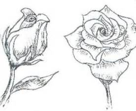 How to Draw a Rose Beginner